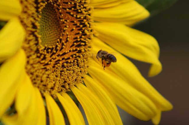 花や虫の写真を撮影していた