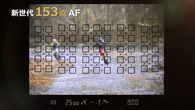 D500のオートフォーカスは153点で画面の全域にわたって配置してある