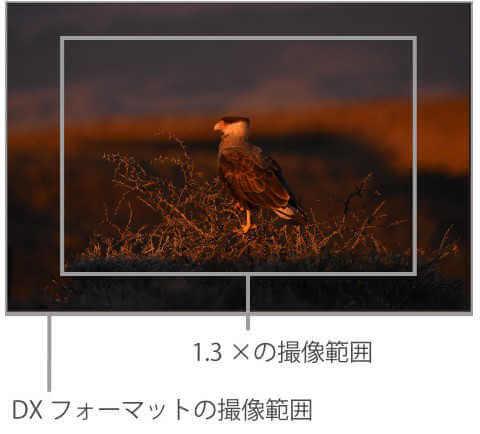 D7200のクロップ撮影機能は望遠にできるし、動画時オートフォーカス精度も高い
